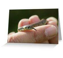 Grass Snake Greeting Card