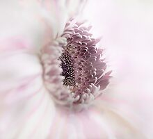 "Soft Pink ""Gerbera"" by Toni McPherson"