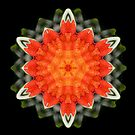 Botanical star by Michael Matthews