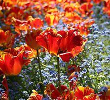 Orange Tulips 2 by KayEeGee