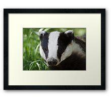 Portrait of a European or Eurasian Badger (Meles meles) Framed Print