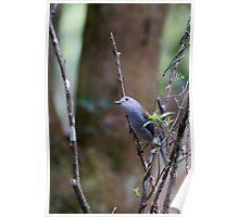 Grey Shrike-thrush Poster