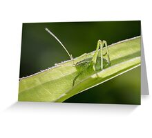 Speckled Bush-cricket Greeting Card