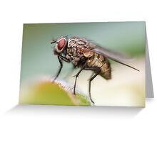 House Fly Greeting Card