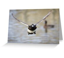 Tufted Duck Greeting Card