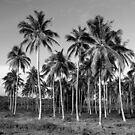 Charcoal Palms by Sarah Howarth [ Photography ]