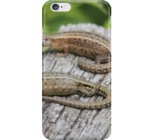 Common Lizards iPhone Case/Skin