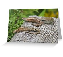 Common Lizards Greeting Card