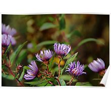 Autumn Purple Poster