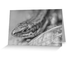 Common Lizard Greeting Card