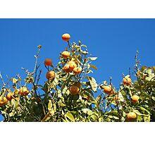 Tangerine tree Photographic Print