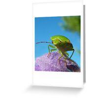 Stinkin Bug..... Greeting Card