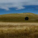 Landline by Bruce  Watson