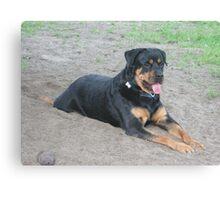Good Dog Zeke Canvas Print