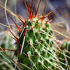 Colorado Cactus by Reptilefreak