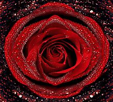 Beautiful Red Rose by Digital Editor .