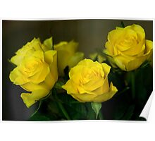 Yellow roses, symbol of friendship and joy Poster