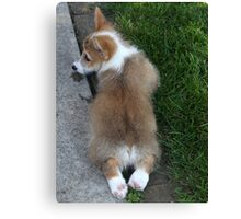 A Tuckered Pup Canvas Print