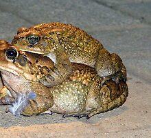 Jump, froggie jump!! by Elizabeth Kendall