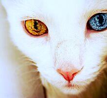The World in Her Eyes by Scott Mitchell