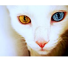 The World in Her Eyes Photographic Print