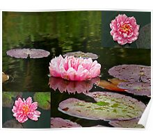 Lilies in Pink Poster