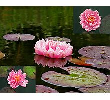 Lilies in Pink Photographic Print