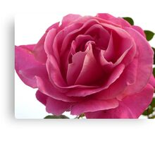 The Rose of Ramelton Canvas Print