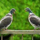 Bekvechten - Fight of beaks by IngeHG