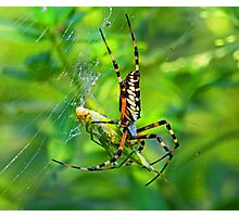 Caught in my web Photographic Print