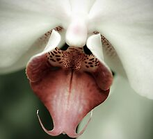 Orchid Beauty by marycarnahan