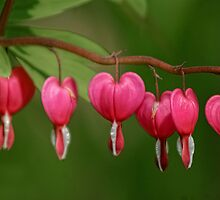 Dangling Hearts by KatMagic Photography