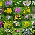 Scottish Wild Flowers in June - Mixed Colours by cuilcreations