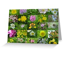 Scottish Wild Flowers in June - Mixed Colours Greeting Card