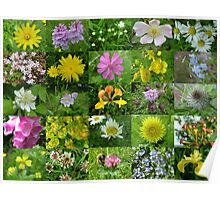 Scottish Wild Flowers in June - Mixed Colours Poster