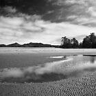Chesterman Beach by Rachael Talibart
