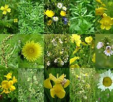 Scottish Wild Flowers in June - Yellow and White - 3x15 by cuilcreations