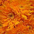 Orange Flowers by JennaKnight