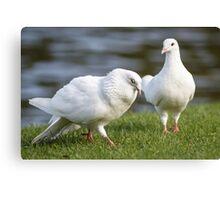 Doves Canvas Print