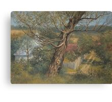 Old willow Canvas Print