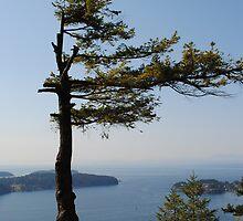 Single Tree by JennaKnight