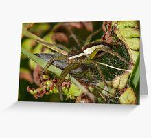 Raft Spider Greeting Card