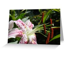 Lily Flower Close Up Floral art Print Pink Lilies Garden Greeting Card