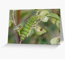 Emperor Moth Caterpillar Greeting Card