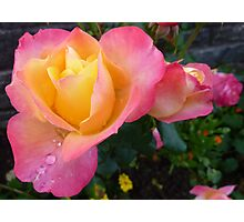 Pink And Yellow Beauty Photographic Print