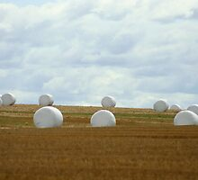 Marshmallow Dream by Lynn  Gibbons