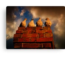 4 Doves Canvas Print