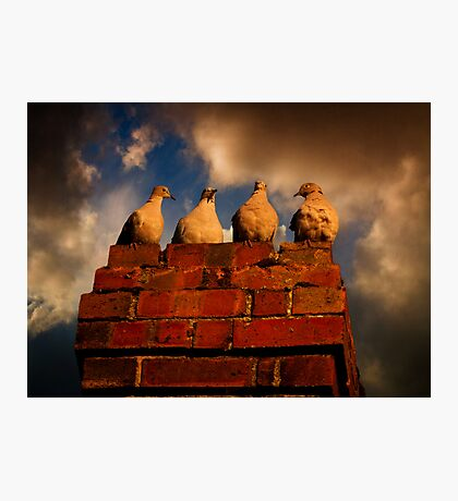 4 Doves Photographic Print