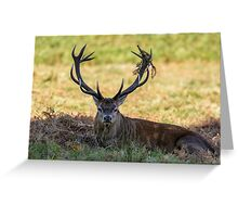 Red Deer stag Greeting Card