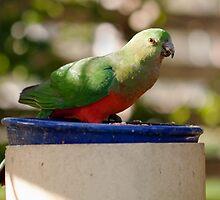 Happy King Parrot by jayneeldred